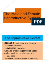 Female Repro