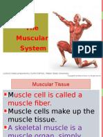 Muscular Ppt