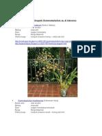 Jenis Anggrek Grammatophyllum