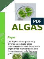 algas-130419123455-phpapp02.pptx