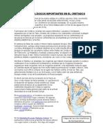 Eventos Geológicos Importantes en El Cretasico y Paleogeno