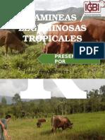 EXPOSICION SABADO PASTOS TROPICALES.pptx