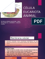 Célula Eucariota Animal