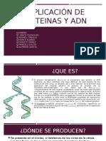 Duplicación de Proteinas y Adn