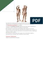 Es La Parte de La Anatomía Que Se Encarga Del Estudio de Los Músculos Desde Sus Diferentes Tipos de Clasificaciones en Conjunto Con Sus Elementos Relacionados