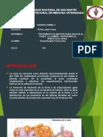 sanidad ii.pptx