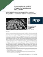 005 - D.T - Crecimiento Mandarin Arrayana - Meta.pdf