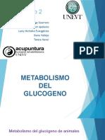 Metabolismo Del Glucogeno, UNEVT