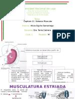 Músculos embriología