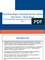 Neurofisiología Clase 1