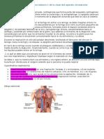 Desarrollo Del Área Número 1 de La Clase Del Aparato Circulatorio