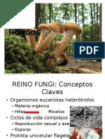 Reino Fungi Resumen