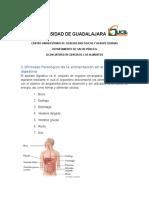 Proceso Fisiológico de La Alimentación en El Sistema Digestivo