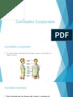 Cavidades Corporales Clase II