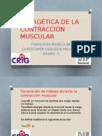 Energética de La Contracción Muscular Cristofer Fisiologia