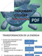 clase Metabolismo Celular