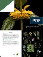 Lipbloemenfamilie.pdf