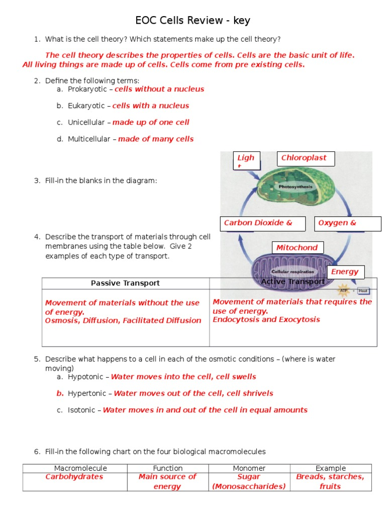 Eoc Cells Review Key Ploidy Meiosis Prokaryotic Diagram Below Learn About