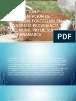 Producción e Implementación de Cuy(Cavia Porcellus) en La Vereda Providencia Del Municipio de Supatá Cundinamarca