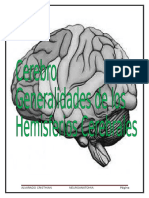 Cerebro Macroscopía