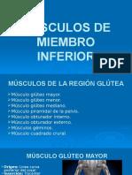 Msculos Del Miembro Inferior 160212003625