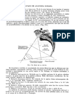 Tratado de Anatomia Humana Quiroz Tomo I_178