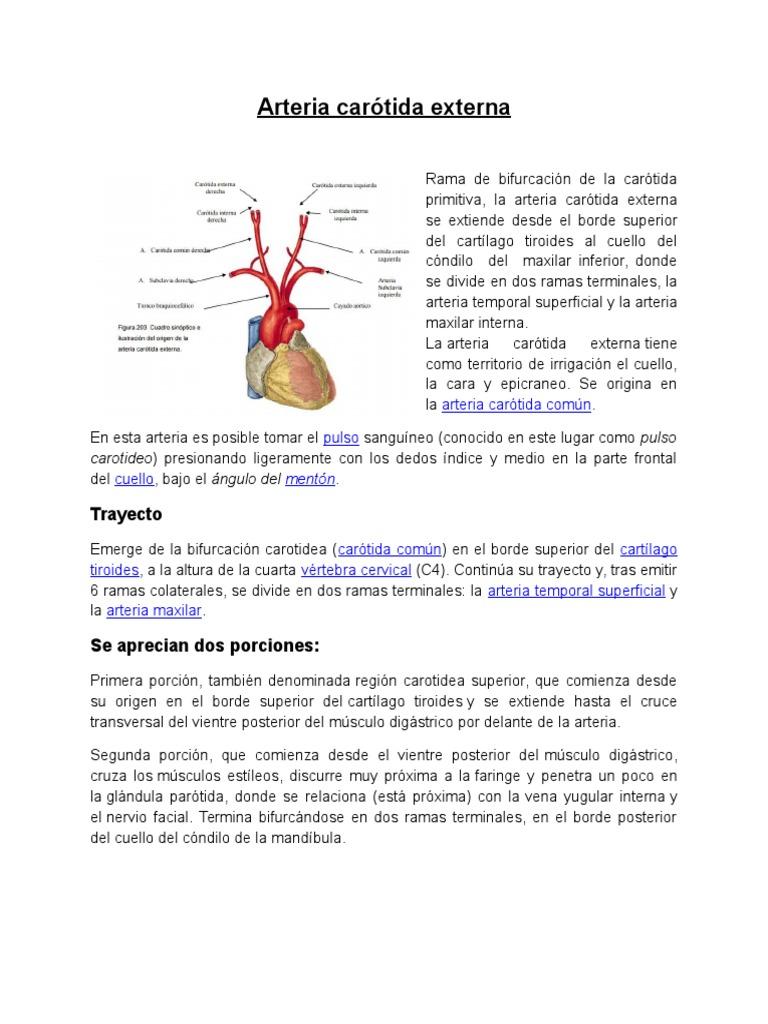 Arteria Carótida Externa Expo Vale