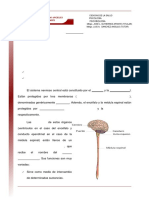 12 Organizacion Anatomofuncional Del Sistema Nervioso Central Snc
