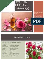 Budidaya Dan Pengolahan Mawar (Rosa Sp)