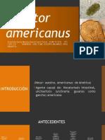 249.Necator Americanus, Necatoriosis, Necatoriasis ETC LUN 05-12-16 ALUMNOS 25, 26,27 2P16