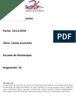 Célula Animal Eucariota