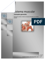 musculos texto