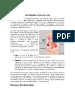 ANATOMÍA DEL FOLÍCULO PILOSO.docx