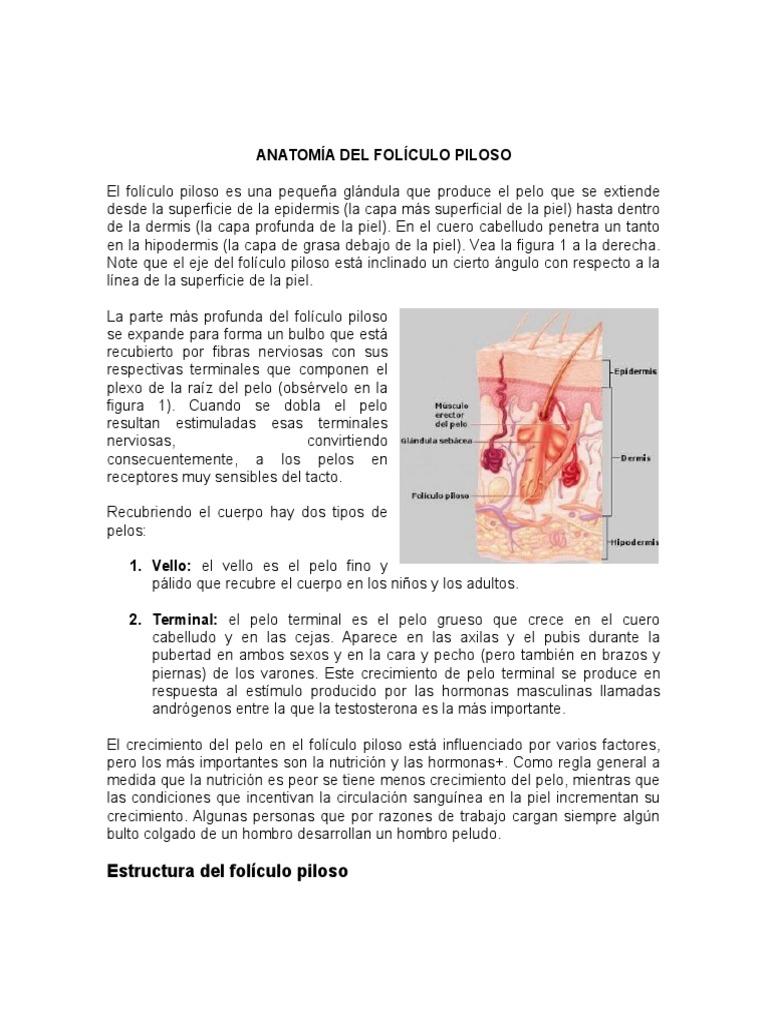 Contemporáneo Anatomía Del Crecimiento Del Cabello Colección de ...