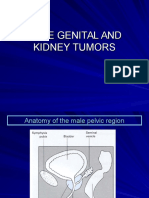 3 Male Genital and Kidney