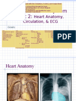 PPt 6.2 - Heart Anatomy, Circulation, ECG