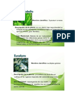 descripcion de plantas hormanentales