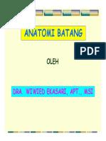 anatomi batang.pdf