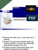 Filum Uniramia