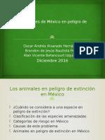 "Equipo 14 Practica Powerpoint ""Animales en peligro de extinción en México"""