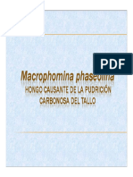 macrophomina_phaseolina