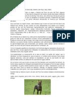 Historia Del Perro Sin Pelo Del Perú