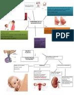 Hormonas de la hipófisis. Anterior y posterior