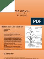 Evolution of Zea mays L edited.pptx