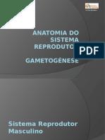 1-Sistema Reprodutor2.ppsx