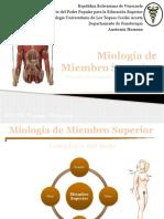 Miologia de Miembro Superior
