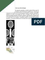 Estructuras Anatómicas Básicas Que Debes Distinguir
