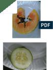 bio12labexam3.pdf