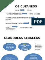 Diapositiva Piel y Anexos Cutáneos II