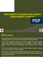 14. High Density Planting and Canopy Managment in Mango_0